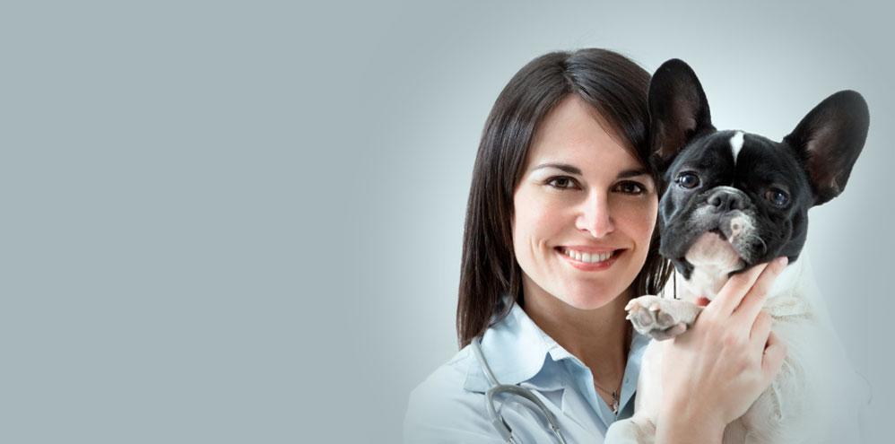 VEC Toronto | Full service Veterinary Emergency Clinic