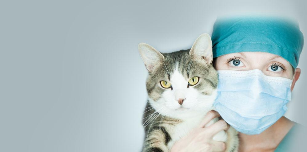VEC Toronto | Comfort Care and Compassion