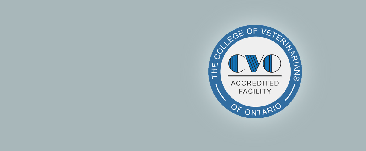 VEC Toronto | CVO Accredation